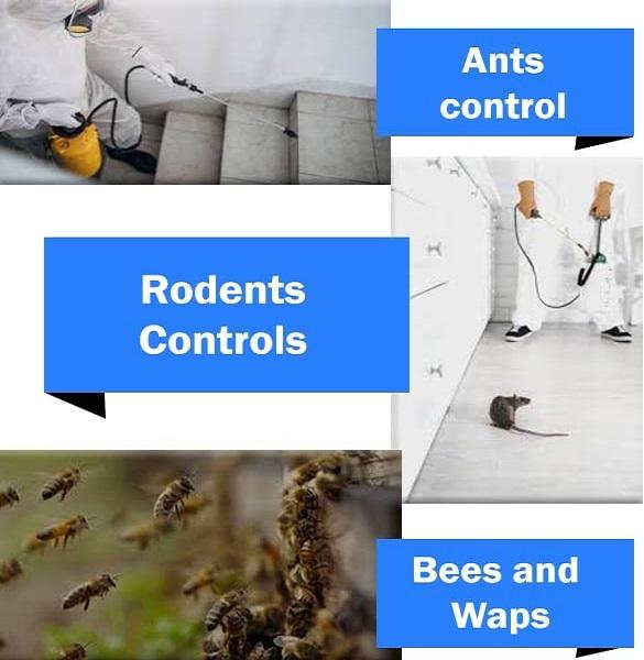 Quality Pest Control Treatment Kallaroo